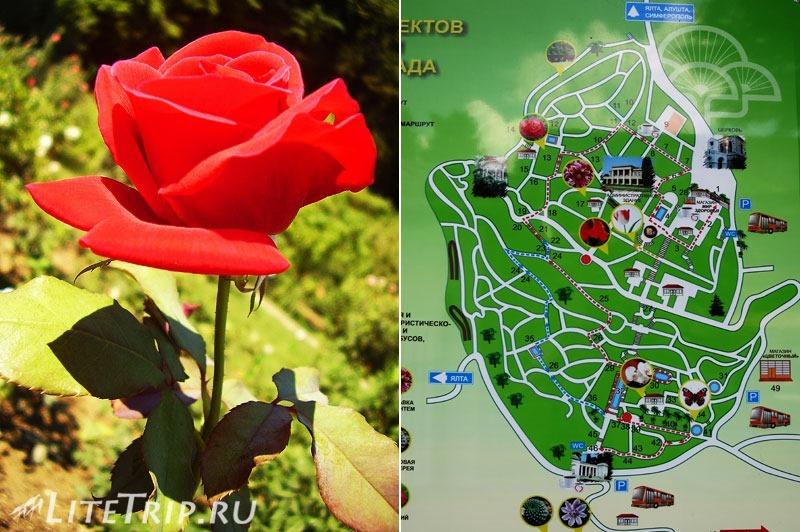 Крым. Никитский ботанический сад. Карта