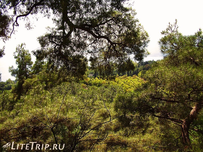 Крым. Никитский ботанический сад. Деревья.