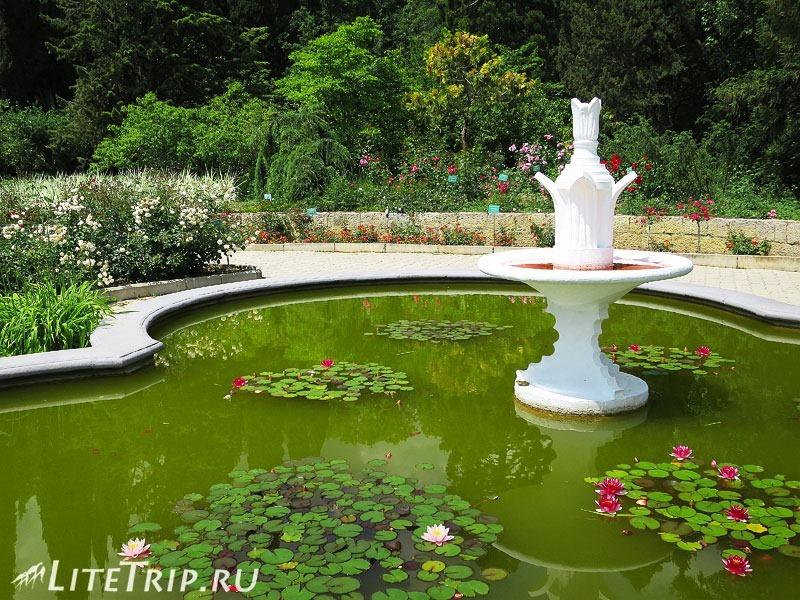 Крым. Никитский ботанический сад. Пруд.