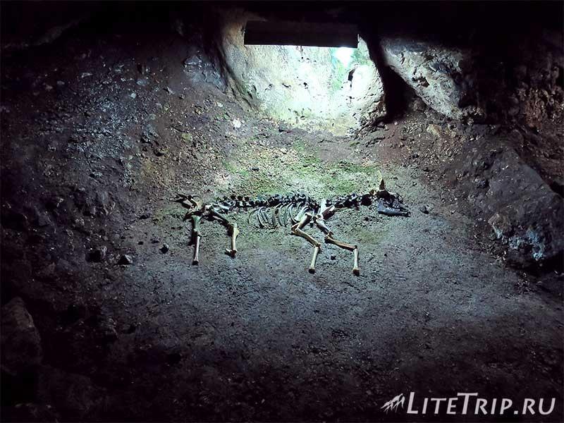Крым. Мраморная пещера. Тигровый зал. Скелет суслика.
