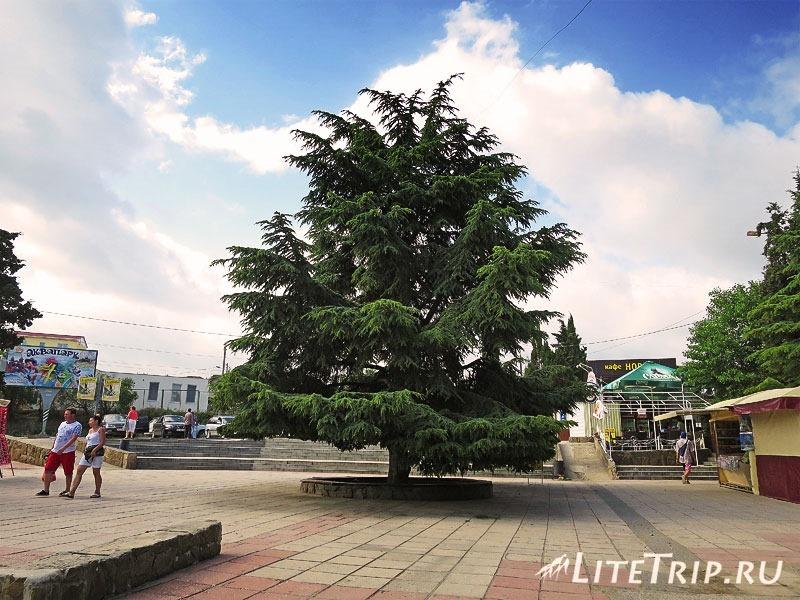 Крым. Судак. Вторая автобусная касса - дерево.