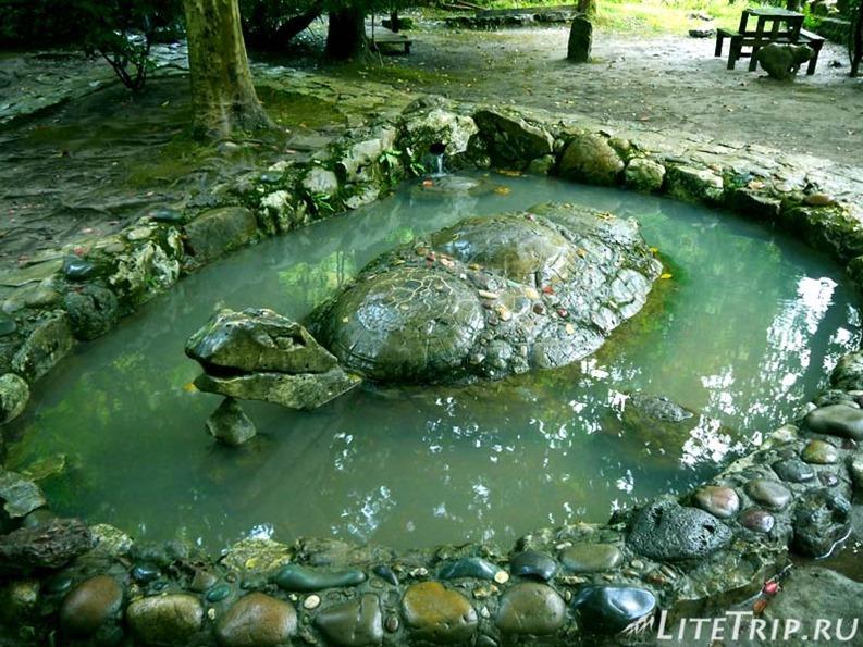 Абхазия. Новый Афон. Грот Симона Кананита - черепаха.