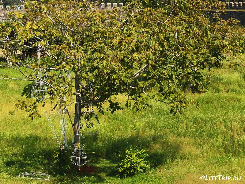 Дерево с инструментами в крепости Гонио