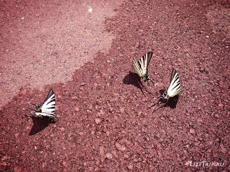 Сербия. Лепенский Вир. Бабочки.