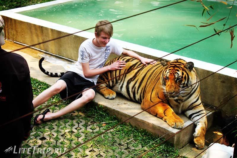 Чианг Май. Tiger Kingdom.