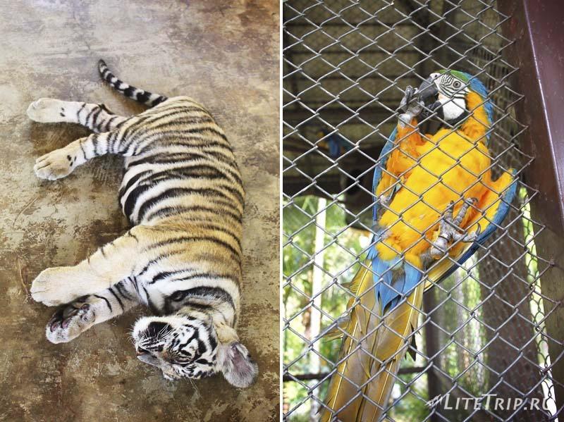 Чианг Май. Tiger Kingdom - другие животные.
