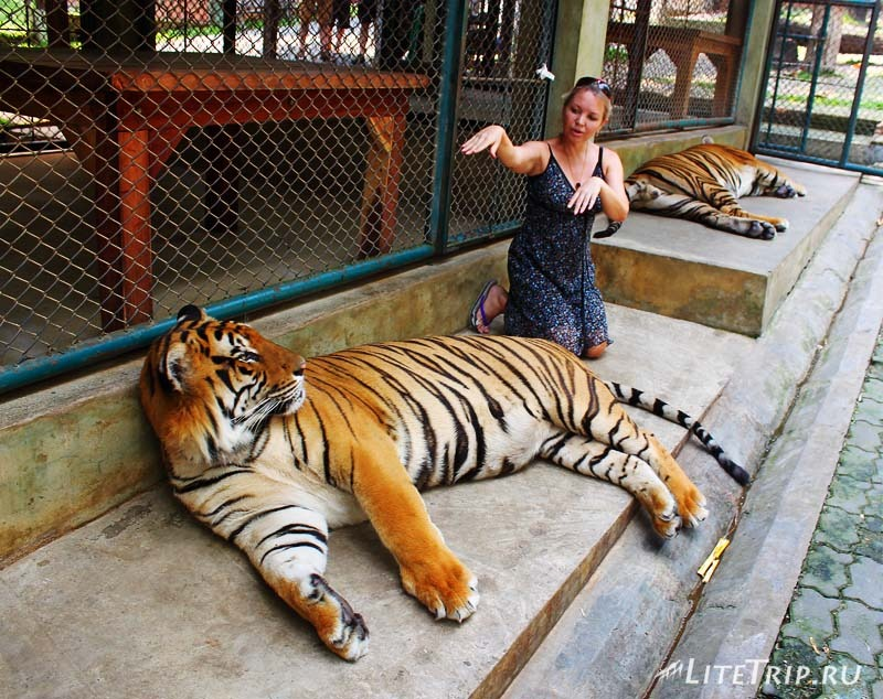 Чианг Май. Tiger Kingdom - в клетке с тиграми.