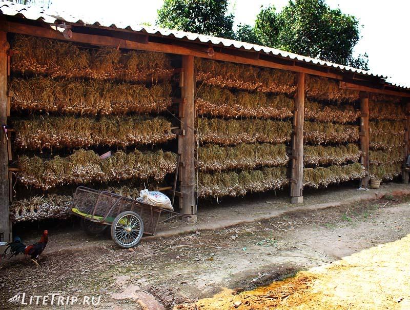 Стена из чеснока в Пае.