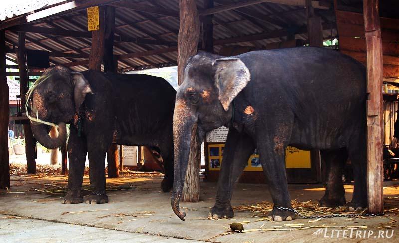 Пай. Ферма слонов.