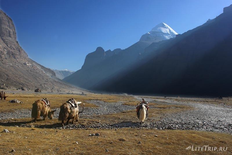 Тибет. Обход внешней коры вокруг Кайласа. Яки.