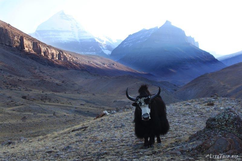 Тибет. Як недалеко от монастыря Силунг.
