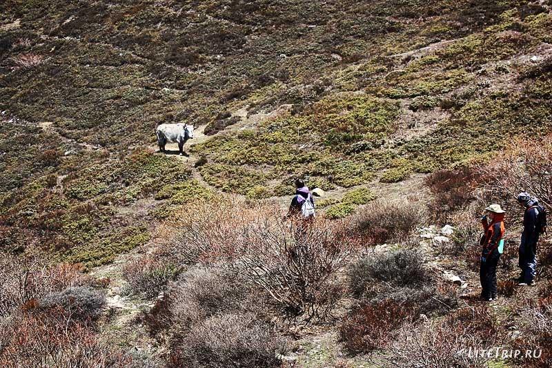 Тибет - Ньялам. Охота на яка.