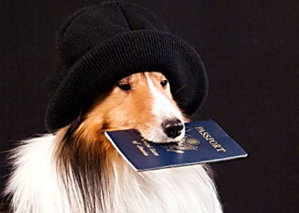Как организовать самостоятельное путешествие - загранпаспорт.