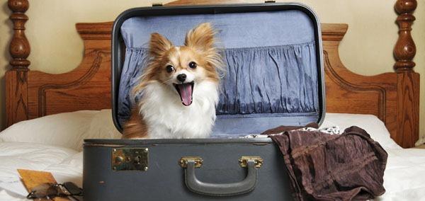 Как организовать самостоятельное путешествие - сбор вещей.